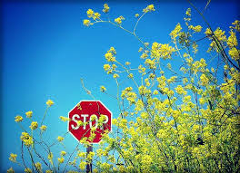 stop sign_expectations